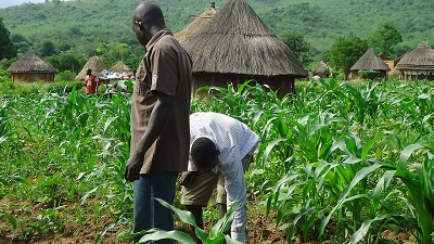 Kwara gets five-year agric master plan: Commissioner