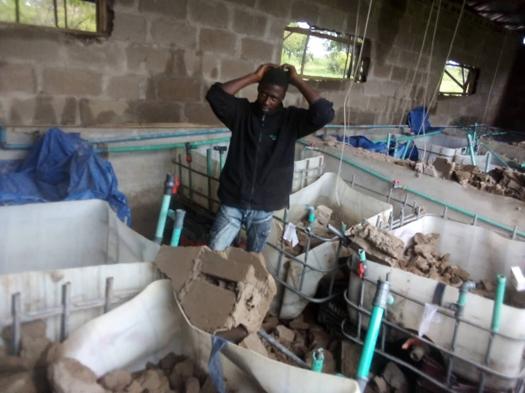 How Ilorin rainstorm snatched #5m bank loan from me, fish farmer laments